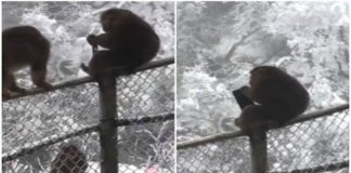 Naughty Monkey, Top Video, Viral Video, Youtube Video