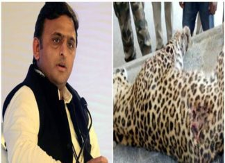 Akhilesh Yadav, Yogi Government, Leopard Death, UP Police, Congress, Encounter