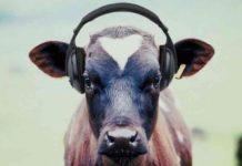 Cow, Music, Gaushala, Ajab-gajab