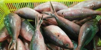 Fish, Cancer, Omega 3, Fatty Acid, Vitamin, Protein , Health News