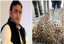 Akhilesh Yadav, Yogi Government, Leopard Death, UP Police, Congress, Encounter