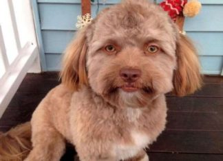 DOG LIKE HUMAN,YOGI DOG,UNBELIEVABLE DOG,CHAINTAL DOGS,AMERICAN DOG,FACE OF DOG
