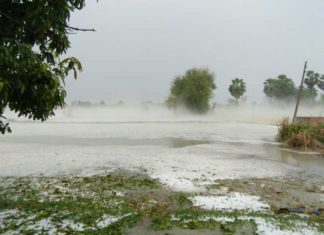 Hailstorm, Crop, Farmer, Bihar,Vaishali, Samastipur
