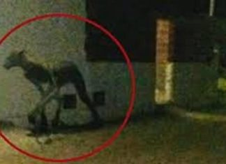 Argentina, Ajab-Gajab, Ghost, Myterious Creature